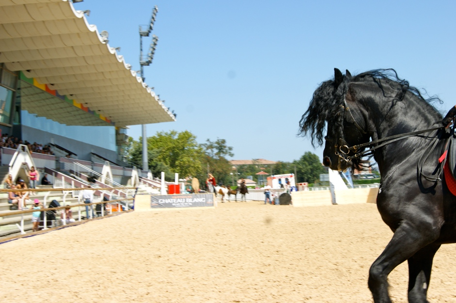 Salon du cheval de toulouse version 2 eclat de soi - Salon du cheval a mons ...