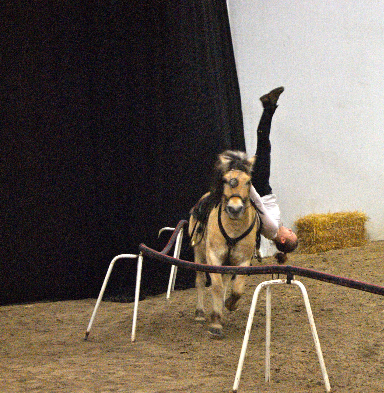 Salon du cheval d albi eclat de soi - Salon cheval toulouse ...